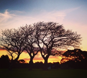 The coral trees at Killalea Beach. Photo: Loulou.loves.greens
