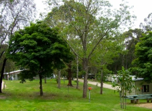 Spacious sites at Shady Gully Caravan Park