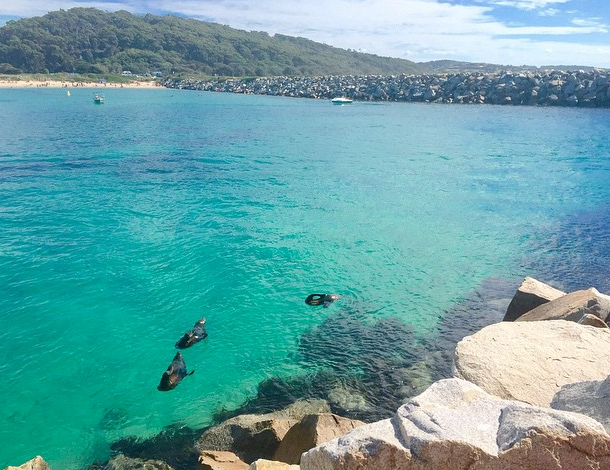 Best beach camping NSW, Australia. Narooma. Photo:CourtneyMcDonald