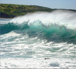 Killalea Beach. Photo: s1mplem1nds