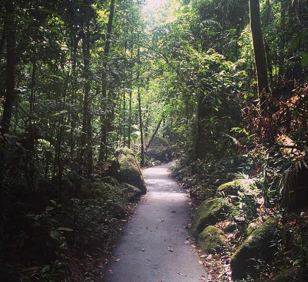 Josephine Falls trail, Wooroonoran National Park, North Queensland, Australia. Photo: AmandaGalise