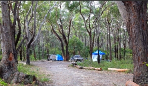 Termeil Point Campground. Photo: National Parks and Wildlife NSW.