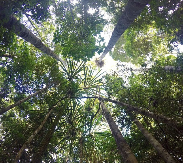 Rainforest trail around Lake Eachem near Cairns. Photo: BackpackerGermany