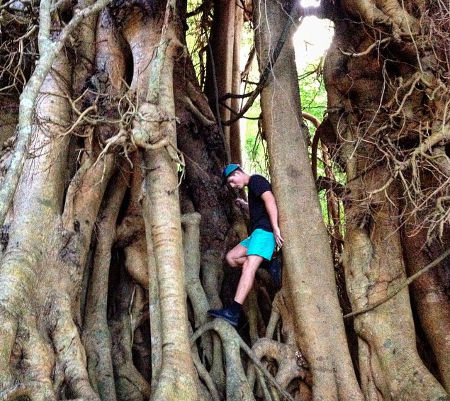 Curtain fig on rainforest trail at Lake Eachem. Photo: ElliotClarke_