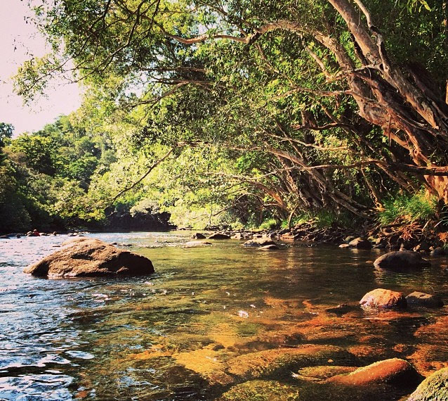 Mulgrave River, Goldsborough Valley near Cairns. Photo:  HambleToNQ