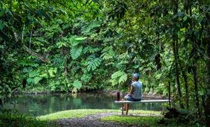 Henrietta Creek campsite in a leafy grotto. Photo: TravelNQ.com