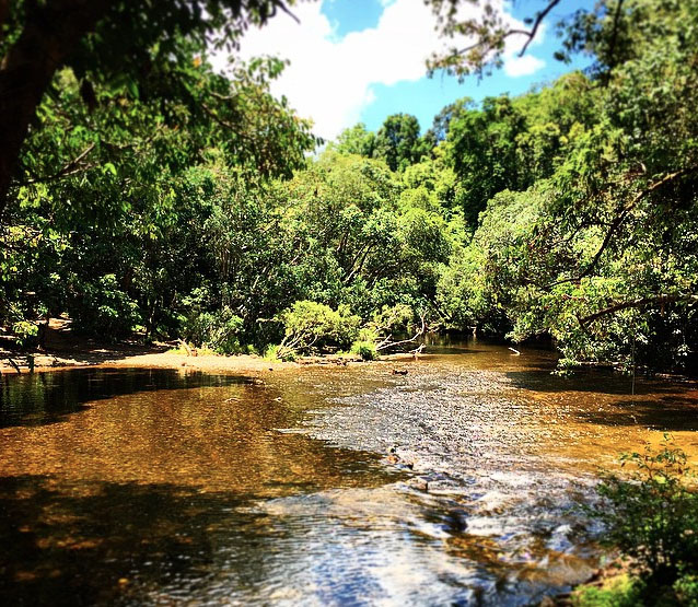 Mulgrave River, Goldsborough Valley near Cairns. Photo:  HickyMan