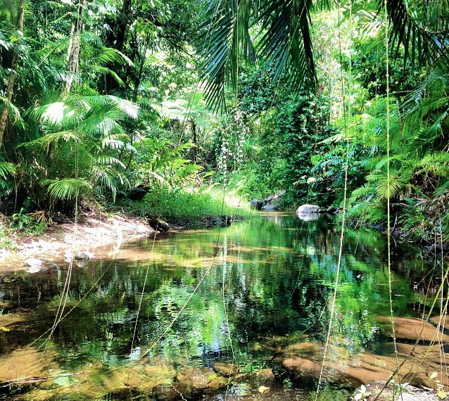 Mulgrave River, Goldsborough Valley near Cairns. Photo:  JadeEeee