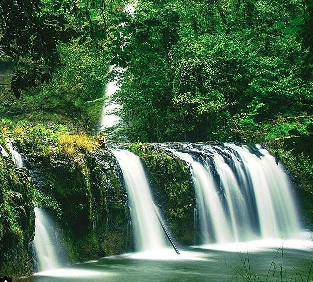 Nandroya Falls (lower), Wooroonooran National Park. Photo: Mitch.Cox