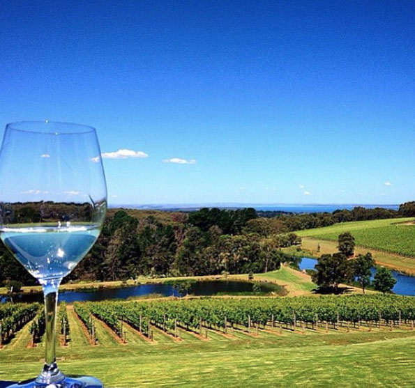 Chardonnay and a view at Port Phillip Estate. Mornington Peninsula, Victoria, Australia. Photo: the_backpack_