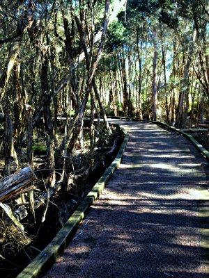 Rhyll Inlet, paperbark walk. Photo: PhillipIslandBalcony.com