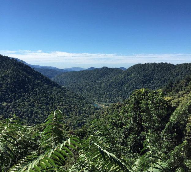 View from Mamu Skywalk, Wooroonooran National Park, Queensland. Photo: Ja_Rao