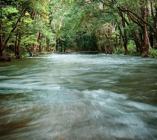 Musgrave River, Goldsborough Valley near Cairns. Photo:  The_Cameron_Mackie
