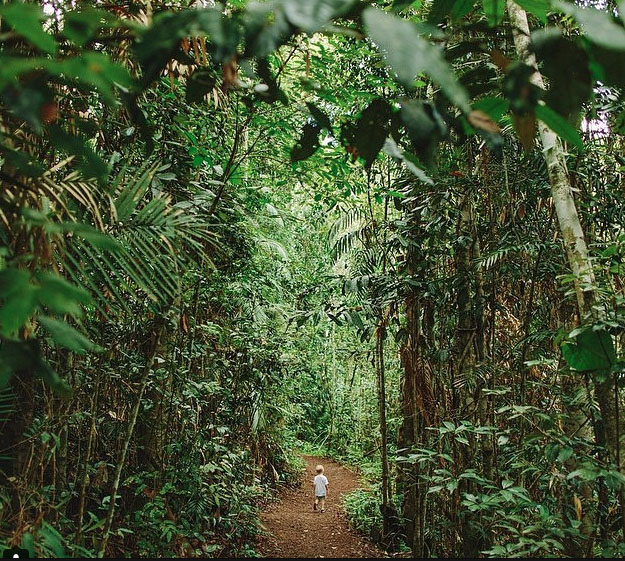 The rainforest trail at Lake Eachem crater lake near cairns. Photo: TimCoulson