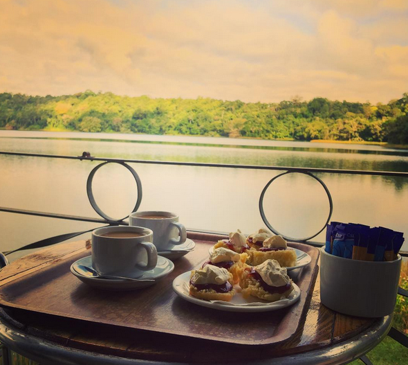 Devonshire tea, Lake Barrine Teahouse, North Queensland, Australia. Photo: Cchuangoo