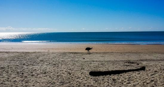 Cassowary on the beach at Etty bay Caravan Park, Queensland, Australia. Photo: Trip Advisor