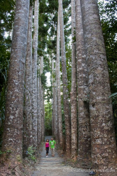 Paronella Park, Queensland, Australia. Photo: LakwatseradePrimera