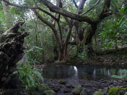 Barney Springs near Rocky Creek rest area on the Atherton Tablelands, Australia. Photo: Gustel Homann