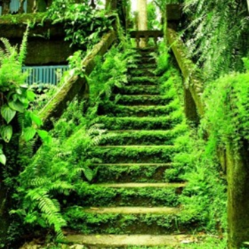 Moss covered stairs at Paronella Park, Queensland, Australia. Photo: VisitCairns