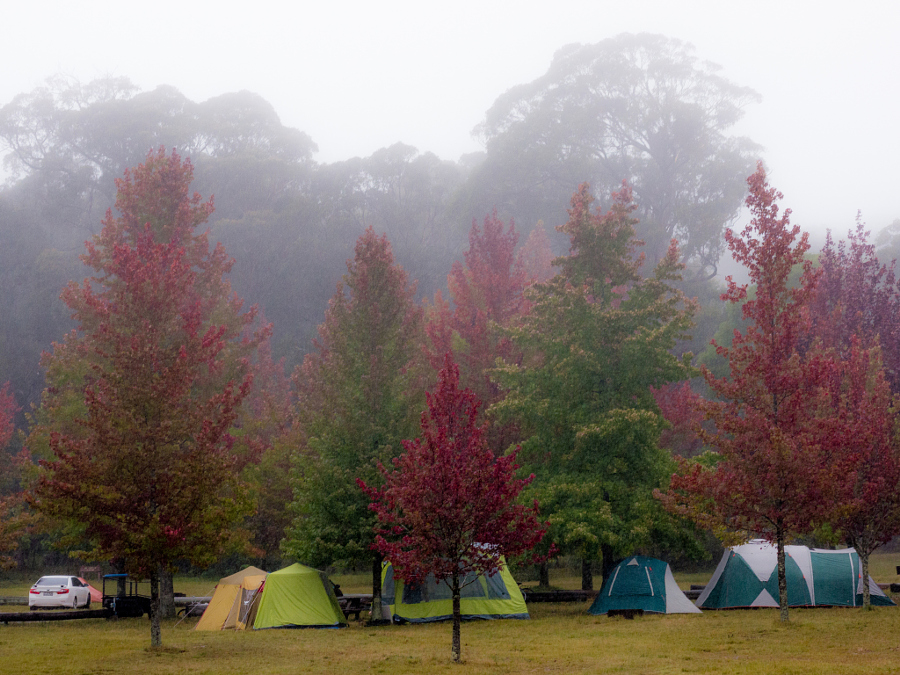 Cathedral Reserve Campground Free Camping Blue Mountains