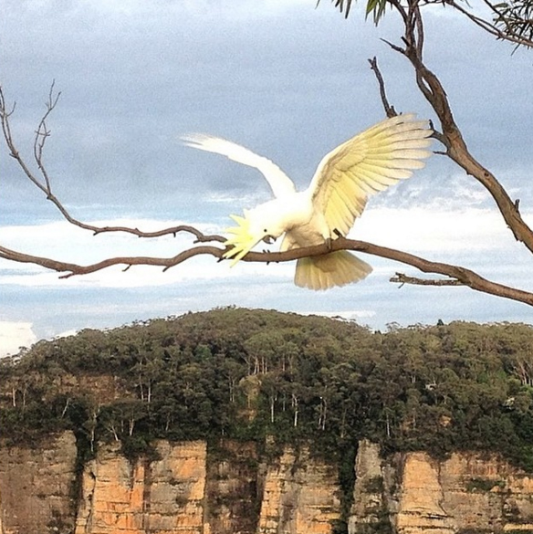Cockatoo, Blue Mountains, Australia. Photo: Clarkey1963