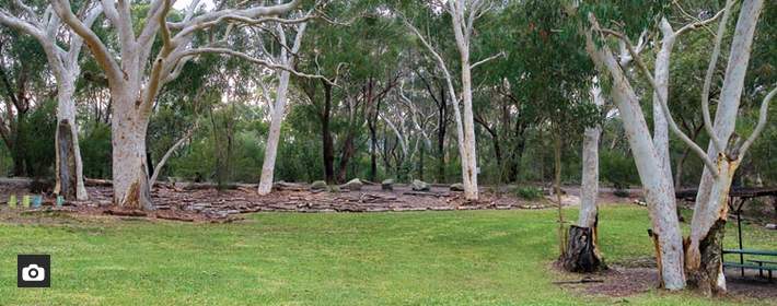 Camping Sydney. Lane Cove River Tourist Park. Photo: National Parks NSW.