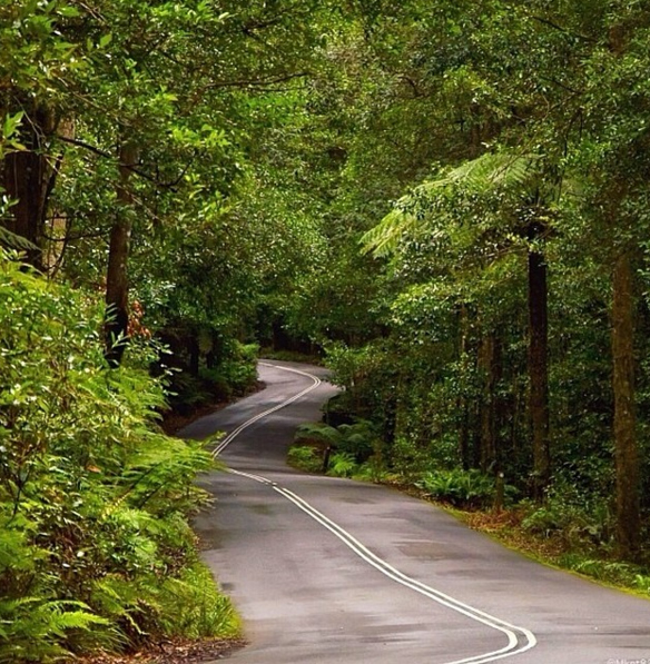 Megalong Road, Blue Mountains. Photo: MKet82