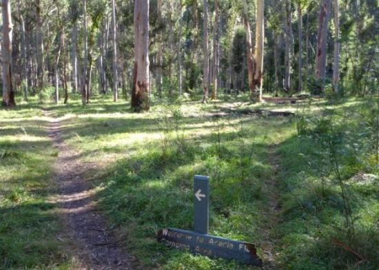 Acacia Flats Campground: Free camping Blue Mountains.