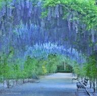 botanic_sandraanne