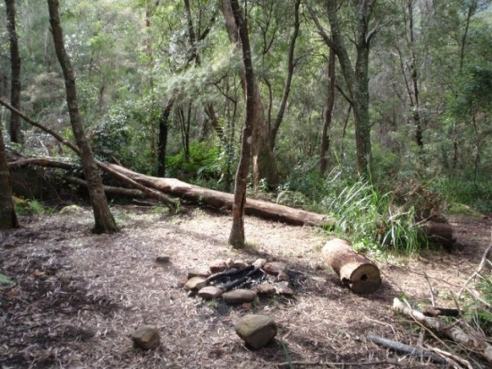 Burra Korain Flat camping area. Free camping Blue Mountains.
