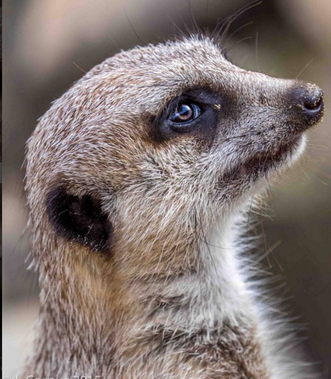zoo_leodotcorpuz