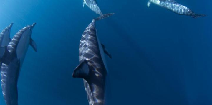 go-ssea-kayak-dolphins