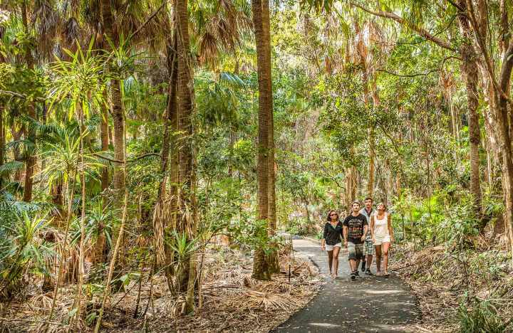 Palm Valley walk, Cape Byron State Conservation Area