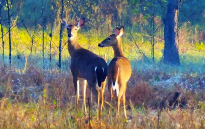 lwr-flaharlock-deer