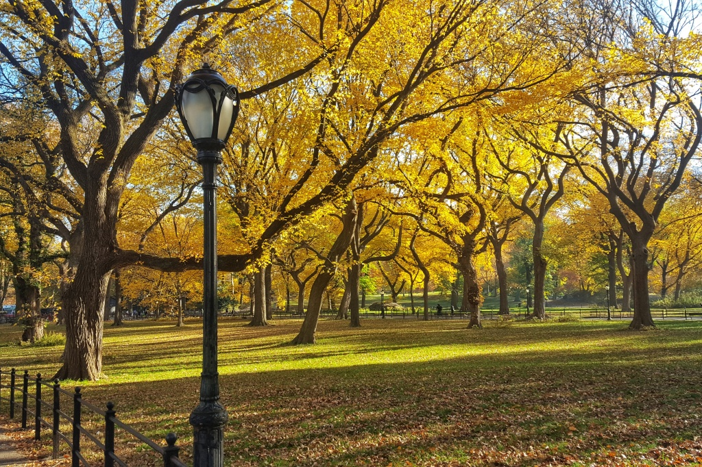 Fall Foliage, Central Park