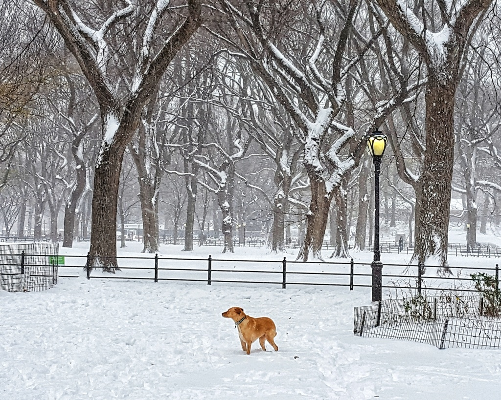 Snowing in New York City, Central Park. Dog and lamp