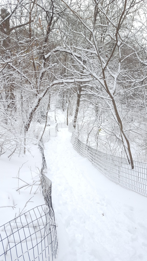 The Ramble covered in snow, New York City, Central Park.