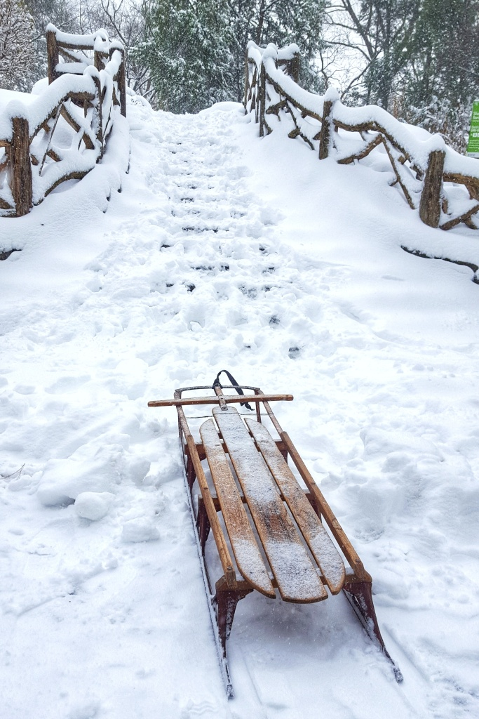 Sled in the snow, New York City.