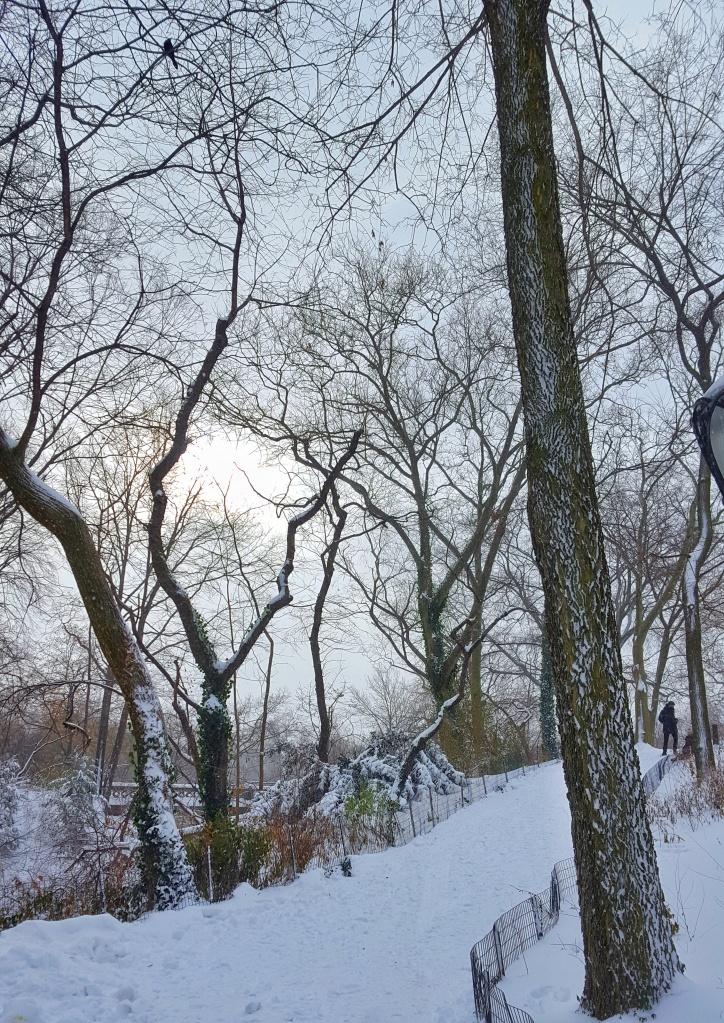 Winter sun and snow, New York City, Central Park.